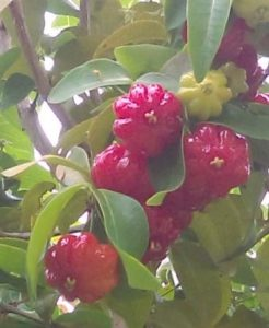 What Fruit Tree is That?
